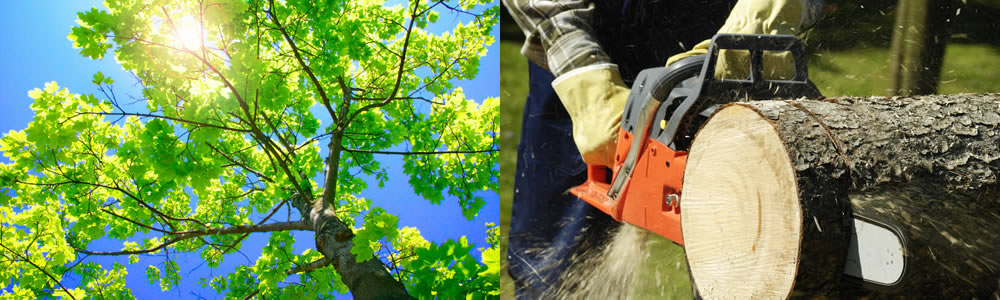 Tree Services West Memphis
